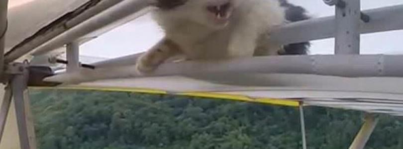 Katze als blinder Passagier auf Flugzeugtragfläche (Video)